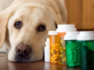 Dog-and-Medicine
